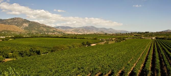 I migliori vini siciliani del 2016: il trionfo dell'Etna